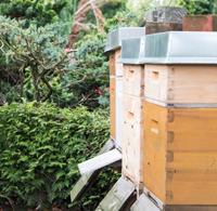 Bienenkästen in Stellingen